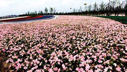 Yancheng Han Hua Yuan Blossom Age