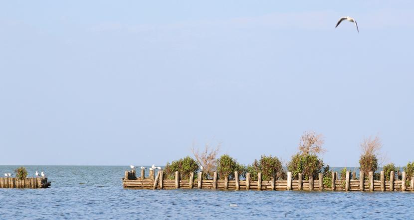 雲南·南滇池國家濕地公園